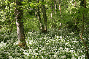Wildlife Holiday Forest of Bowland.